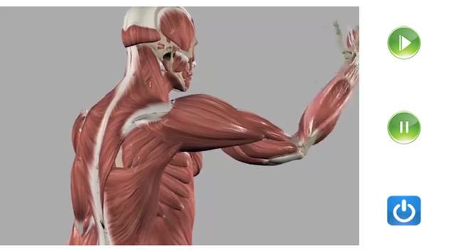 Visual Anatomy Free скриншот 7