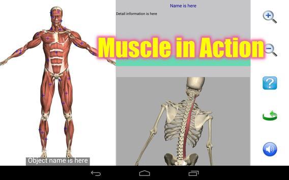 8 Schermata Visual Anatomy Free