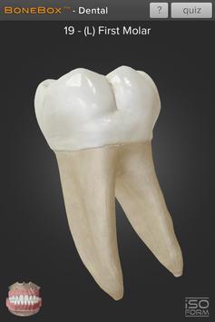 BoneBox™ - Dental Lite screenshot 2