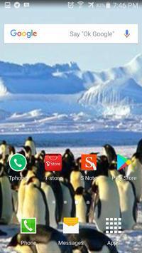 Penguin Wallpaper HD screenshot 1