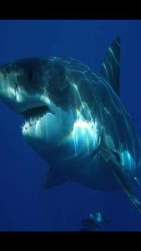 Shark Wallpaper HD screenshot 1