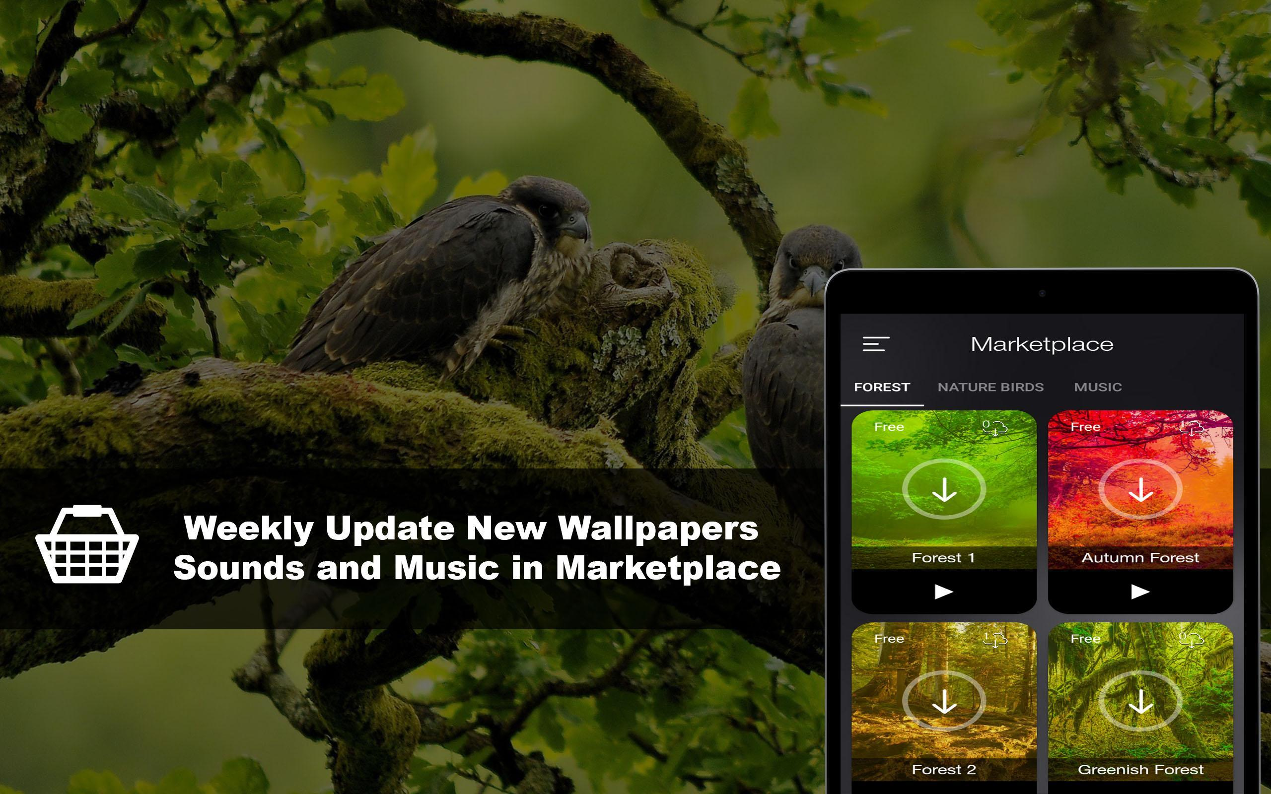 Bird sounds: Relax Nature Sounds HD for Android - APK Download