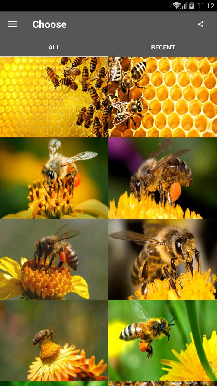 Best Honey Bee Wallpaper For Android Apk Download