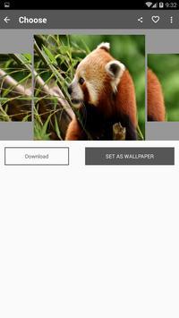 Red Panda Wallpaper screenshot 1
