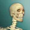 ikon Idle Human