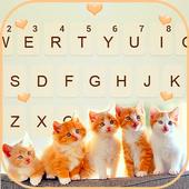 Cute Kittens 아이콘