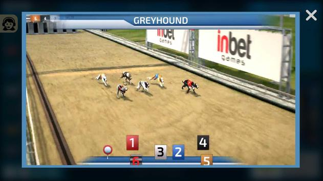Dogs3D Races Betting screenshot 2