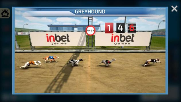 Dogs3D Races Betting screenshot 4