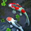Wallpaper Hidup Kolam Ikan Koi ikon