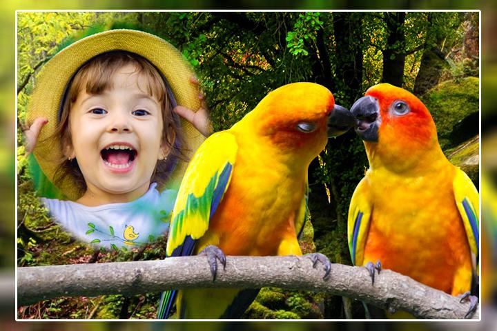 Love Birds Photo Frames HD for Android - APK Download