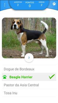 Quiz - Raças de cachorros screenshot 5