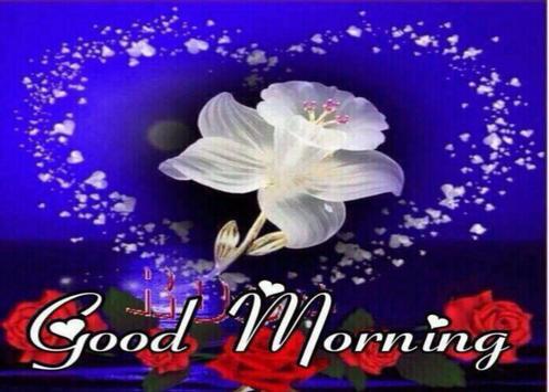 Good Morning Images Gif Animated captura de pantalla 4