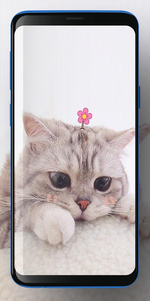 Wallpaper Kucing Lucu For Android Apk Download