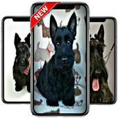 scottish terrier wallpaper icon