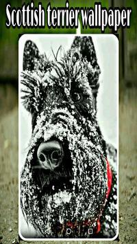 scottish terrier wallpaper screenshot 4