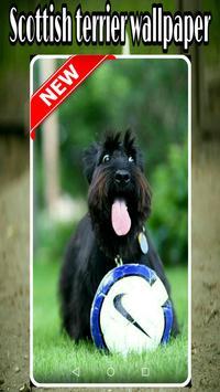 scottish terrier wallpaper poster