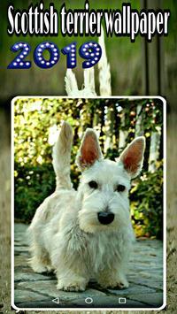 scottish terrier wallpaper screenshot 2