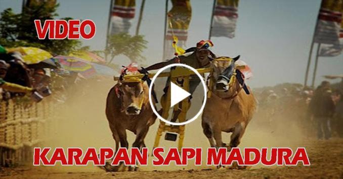 Video Karapan Sapi Madura poster