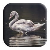 Swan Sounds icon