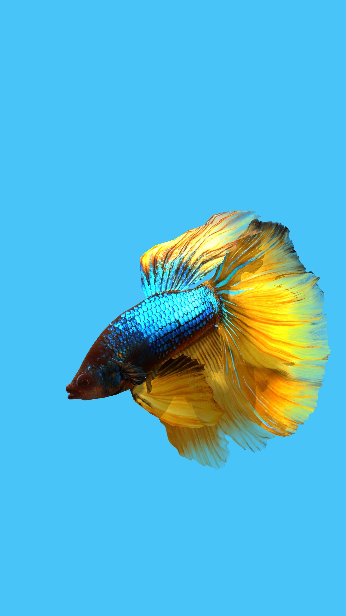 Betta Fish 3d Free For Android Apk Download