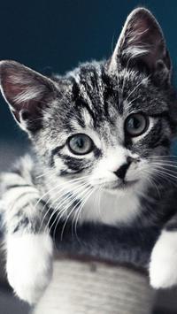 Kitty Cat Live Wallpaper screenshot 3