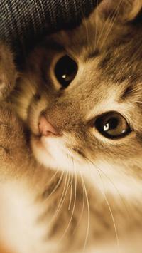 Kitty Cat Live Wallpaper poster