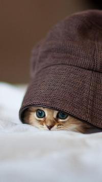 Kitty Cat Live Wallpaper screenshot 1