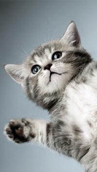 Kitty Cat Live Wallpaper screenshot 2