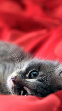 Kitty Cat Live Wallpaper screenshot 4
