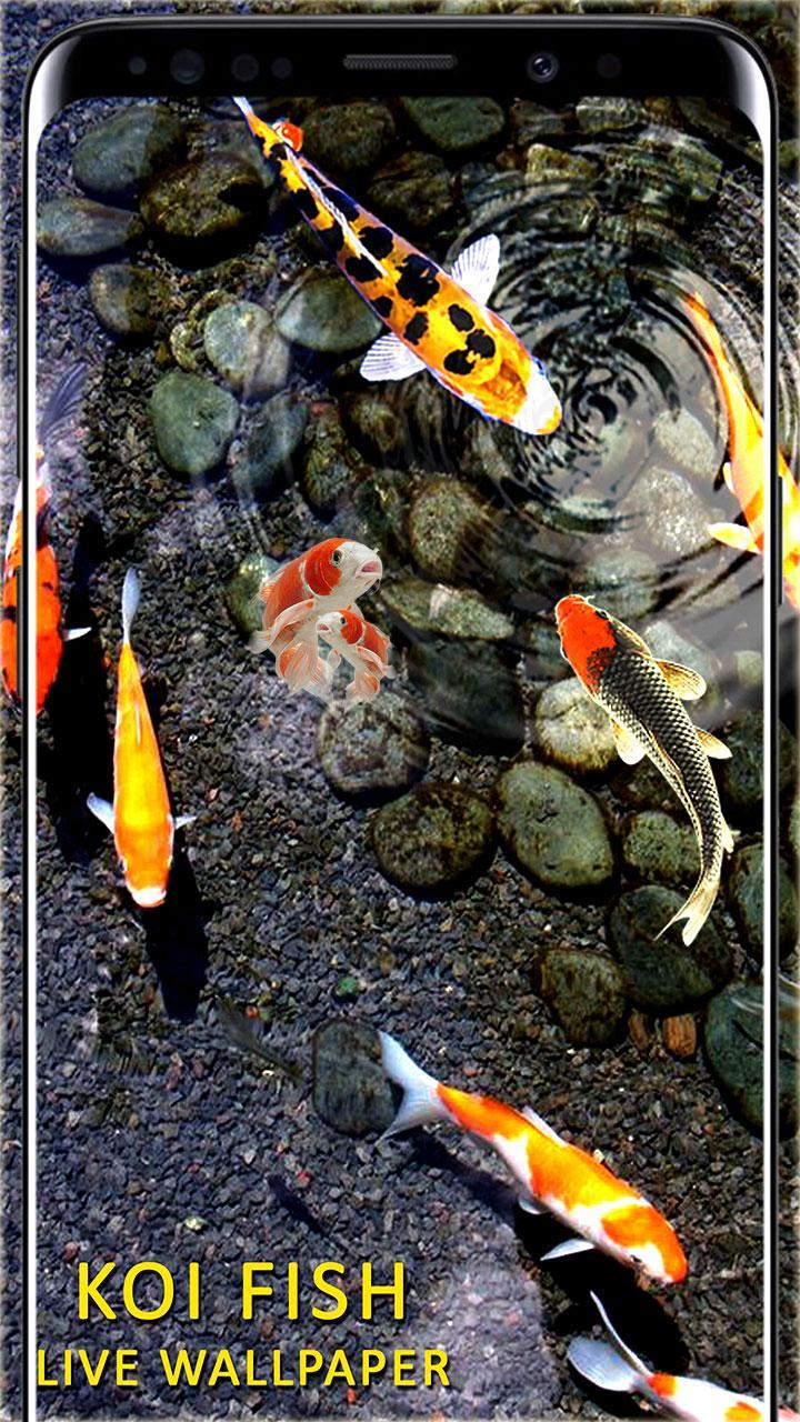 Peces Koi Live Wallpaper Fondos De Peces Hd For Android