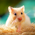Cute Pets Live Wallpaper
