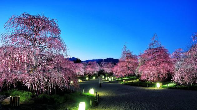 Sakura Live Wallpaper screenshot 6