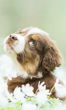 Puppy Live Wallpaper - backgrounds hd poster