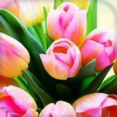 Tulips Live Wallpaper icon