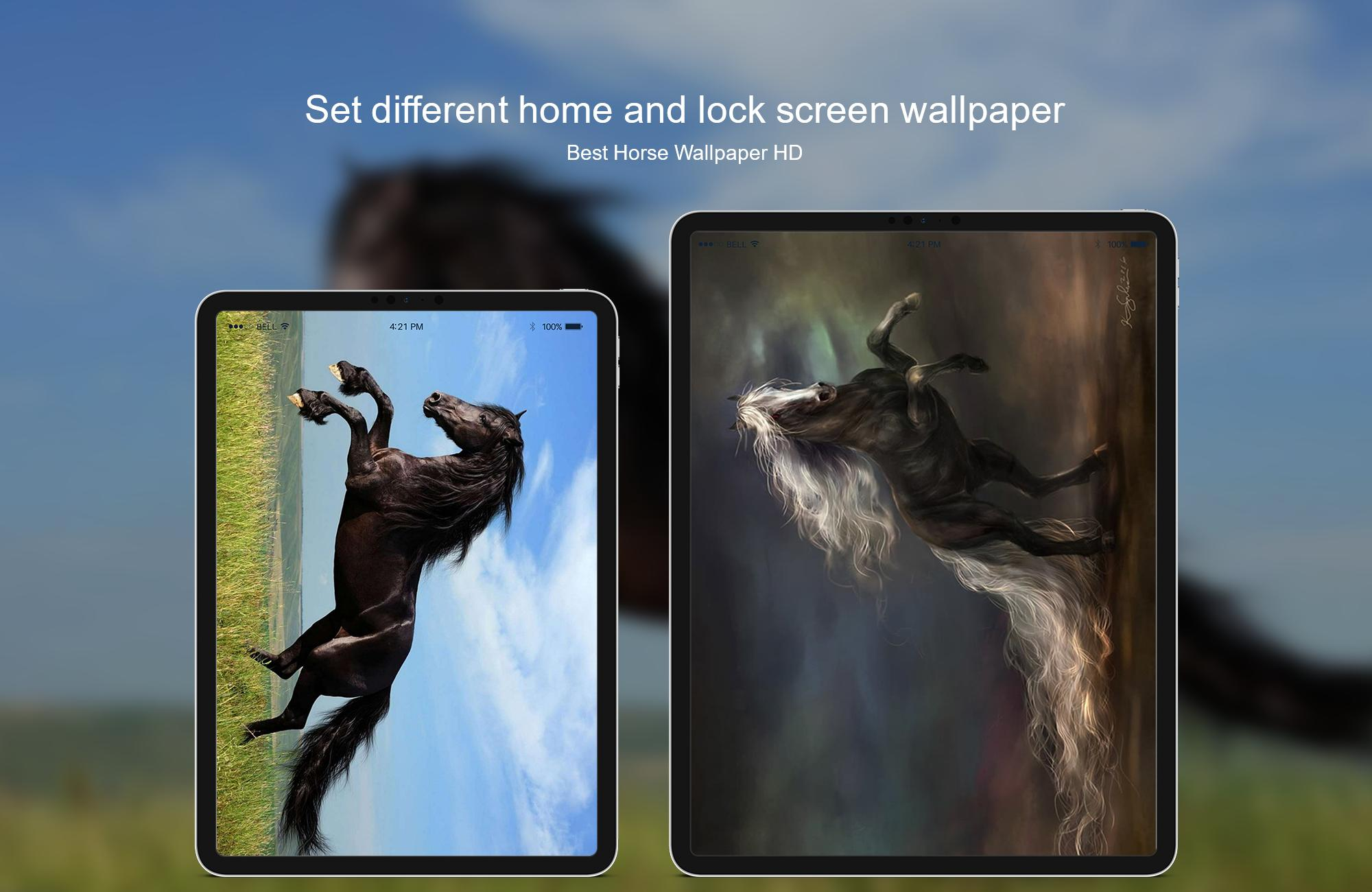 Best Horse Wallpaper Hd For Android Apk Download