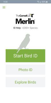 Merlin Bird ID penulis hantaran
