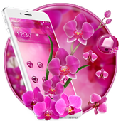 Pink Orchid Spring Flowers Theme icon
