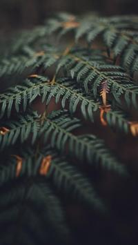 Leaf HD Wallpaper screenshot 15