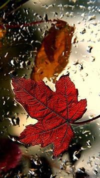 Leaf HD Wallpaper screenshot 2