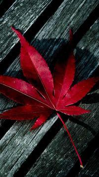 Leaf HD Wallpaper screenshot 3