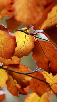 Leaf HD Wallpaper screenshot 6