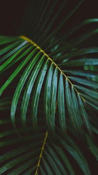 Leaf HD Wallpaper screenshot 8