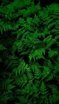 Leaf HD Wallpaper screenshot 9