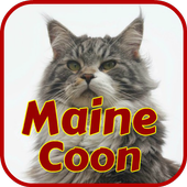 Maine Coon Wallpapers icon