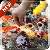 Koi Free 3D Live Wallpaper icon