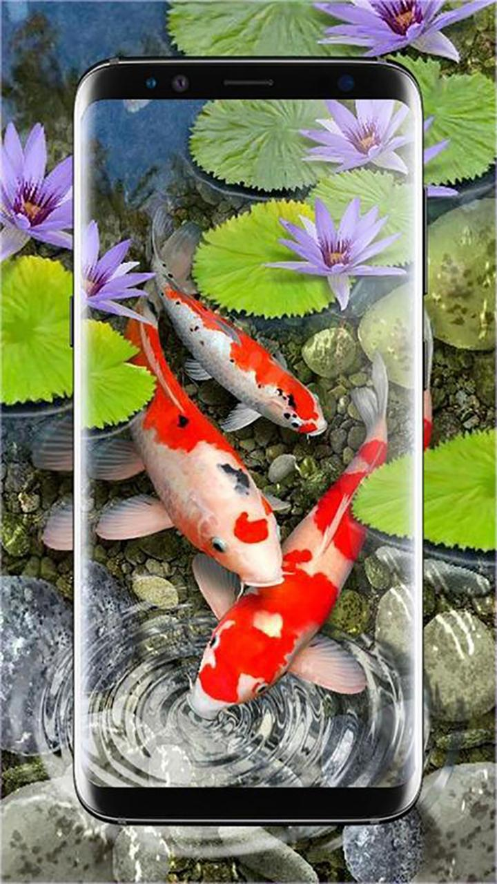 Koi Fish Live Wallpaper For Android Apk Download