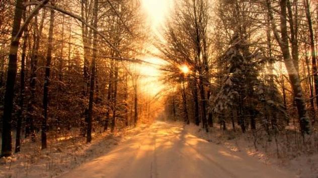 Winter forest 1 screenshot 4