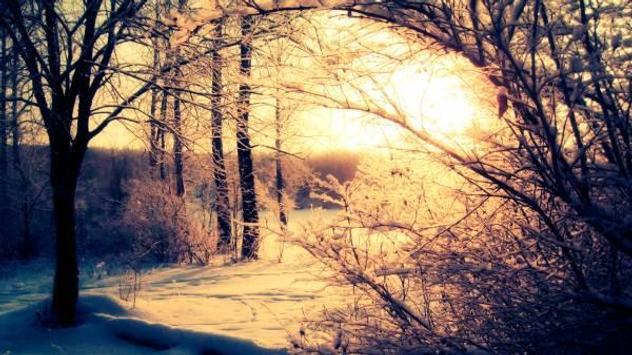 Winter forest 1 screenshot 5