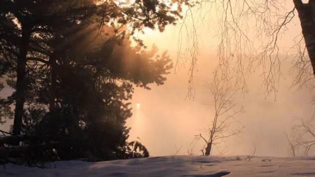 Winter forest 1 screenshot 2