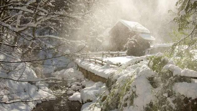 Winter forest 1 screenshot 3